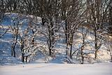 Snow with trees.