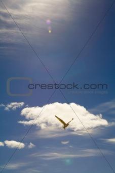 0017Free flight