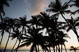 Palm trees by ocean.