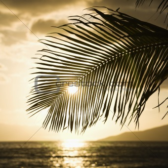 Sun setting with palm.