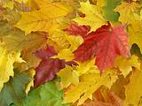 autumnal leaves 5