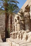 Egypt Series (Palm Tree and Lions)