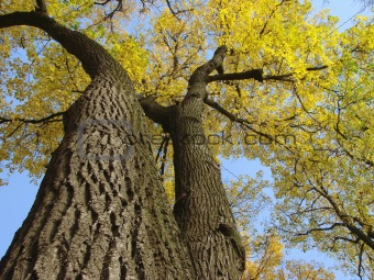 autumnal trees 1