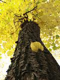 autumnal tree 1
