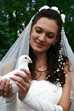 The bride holds in hands of the white pigeon