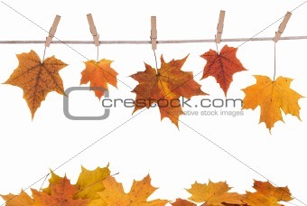 fall leaves hanging on a clothesline