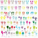 Collection of shoe print, footprint, animal and bird trails