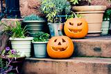 Halloween Pumkins at the Threshold