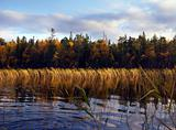 Autumn trees and plants near water in Karelia