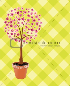 pot tree in blossom