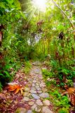 Footpath in the jungle