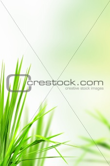 abstract fresh grass for background