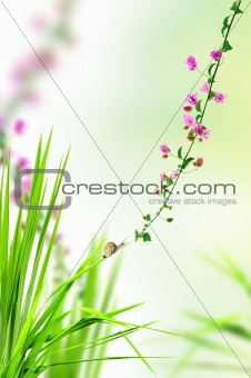 snail on the fresh grass with pink floral