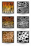 Animal Skin Texture