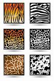 Animal Skin Texture