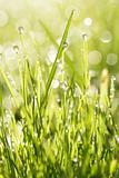 Grass fresh
