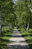 path outside