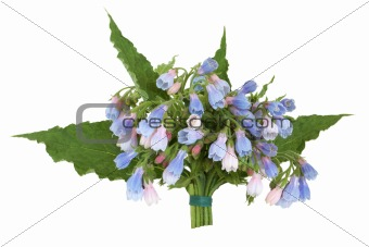 Comfrey Herb Flower Posy