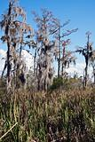Jean Lafitte Preserve