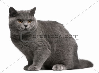 British Shorthair kitten, 6 months old, sitting in front of white background