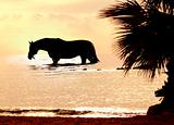 the horse in marine sunset