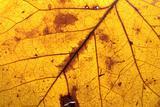 Colorful fall leaf