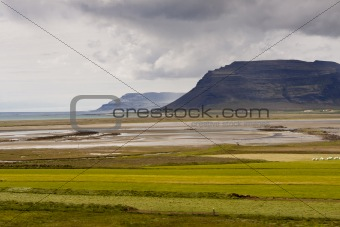 Green meadow Vestfjord - Iceland