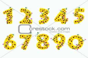 sunflower numbers 0 - 9 isolated on white background