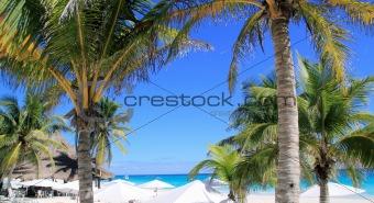 caribbean tropical beach white parasol coconut palm