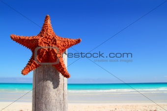 caribbean starfish on wood pole beach
