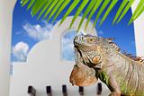 Mexican iguana white archs house blue sky in Mexico