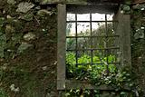 Nature Window