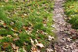 Path by Autumn Leafs