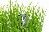 compass in green grass