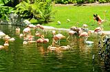 Pink flamingoes on the bright summer day