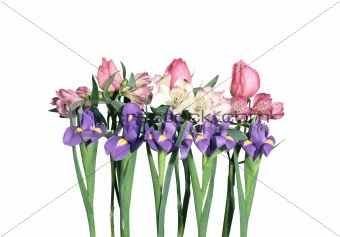 Beautiful iris flowers isolated on white background