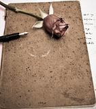 roses and a fountain pen