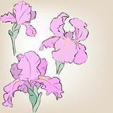 Irises. Vector greeting card. Mother's Day