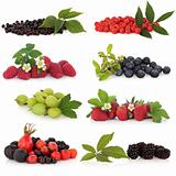 Berry Fruit Sampler