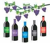 Vector wine bottles with grapes