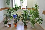Many indoor plants in the Hall