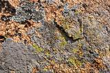 mountain texture