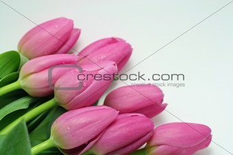 A Pink Tulip Bouquet
