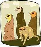 suricate