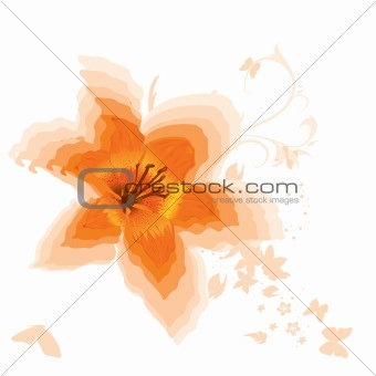 Beautiful orange lily. Vector.
