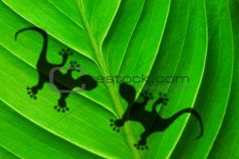 green jungle leaf and gecko
