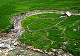 Rice Field House
