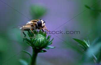 Flie On Flower