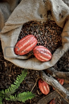 Cocoa Beans and Cocoa Fruits