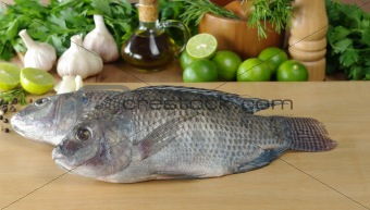 Fish Called Tilapia